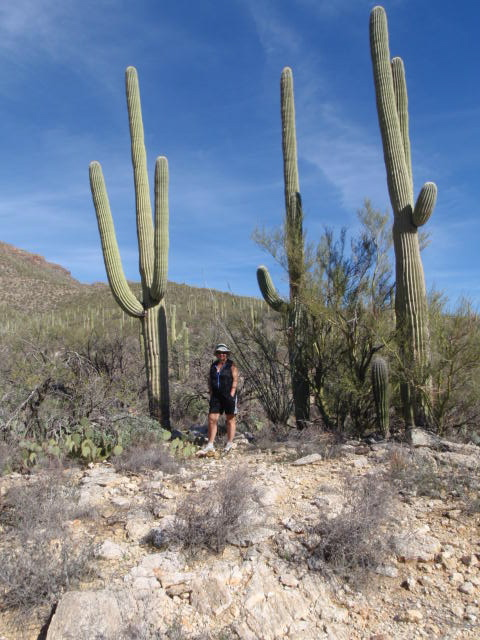 Really big Saguaros!