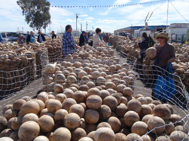 Hoards of gourds.  Those in the craft buy them here.