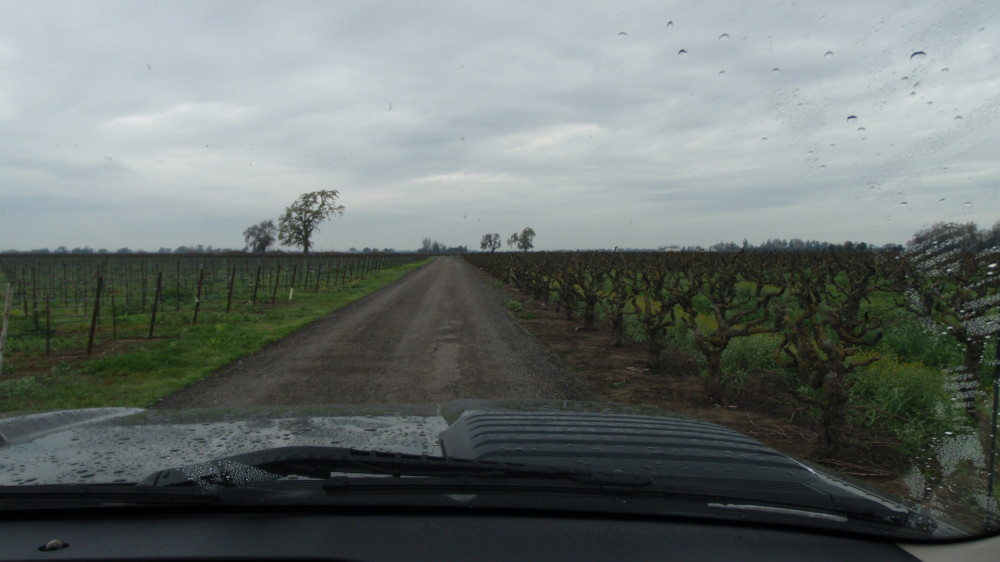 New vines on the left, old zin on the right.